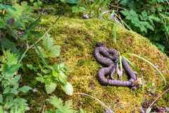 Serpiente que toma el sol en una roca Imágenes de archivo libres de regalías