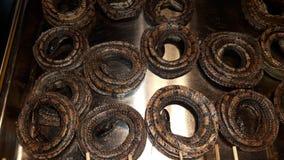 Serpiente secada Fotos de archivo libres de regalías