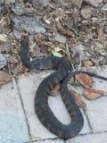 Serpiente venenosa imágenes de archivo libres de regalías
