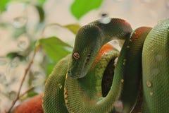 Serpiente verde Imagenes de archivo