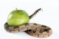 Serpiente y manzana. imágenes de archivo libres de regalías