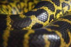 Serpientes fotografía de archivo