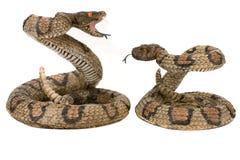 Serpientes Foto de archivo libre de regalías