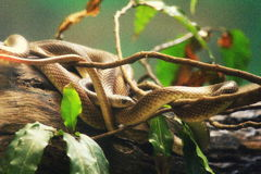 serpientes Imagen de archivo libre de regalías