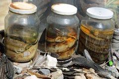 Serpientes conservadas en vinagre Fotografía de archivo