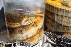 Serpientes conservadas en vinagre Imagen de archivo libre de regalías
