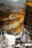 Serpientes conservadas en vinagre Imagen de archivo