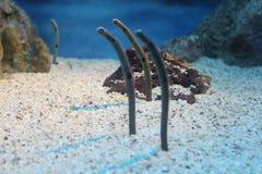 Serpientes de mar Foto de archivo libre de regalías