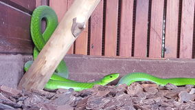 Serpientes hermosas Imagen de archivo
