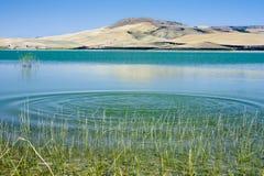 serra basentello corvo del озера Стоковые Изображения RF