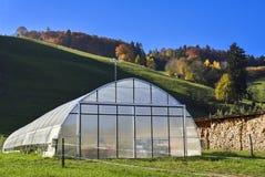 Serra con gli ortaggi freschi coltivati da Wavern Fotografia Stock