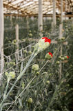Serra con i fiori Fotografia Stock Libera da Diritti