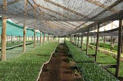 Serra con la piantatura Immagini Stock