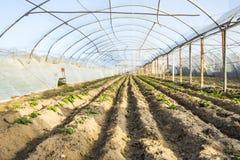 Serra con la piantatura delle verdure dentro immagini stock