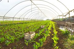 Serra con le verdure commestibili fotografie stock libere da diritti