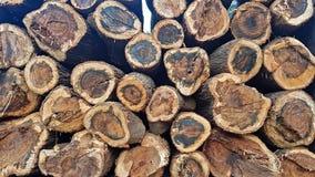 A serra cortou os troncos empilhados junto mostrando o seção transversal fotografia de stock royalty free