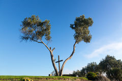 Serra Cross in Ventura California between trees Royalty Free Stock Photos