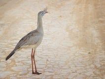 Serra da Canastra National Park - rotfüßiger seriema Cariamidae Stockfotos