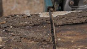 Serra de cadeia que vê a madeira seca que encontra-se na terra, madeira do corte do lumberman com serra de cadeia Movimento lento filme