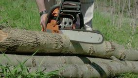 A serra de cadeia vermelha viu uma madeira vídeos de arquivo