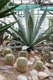 serra dei cactus Fotografie Stock Libere da Diritti