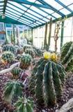 Serra del cactus Immagine Stock Libera da Diritti