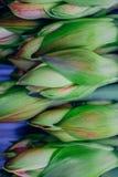 Serra del fiore fotografie stock