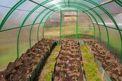 Serra del policarbonato in un giardino privato con le piantine piantate del pomodoro immagini stock libere da diritti