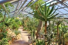 Serra del succulente e del cactus, Hannover, Germania Immagini Stock Libere da Diritti