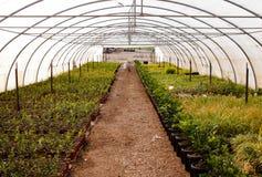 Serra dell'azienda agricola del giardino Fotografia Stock Libera da Diritti