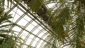 Serra dell'interno con le palme dai lati della carrozza stock footage