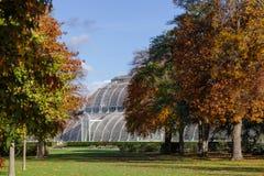 Serra della Camera di palma nel sud-ovest Londra Inghilterra Regno Unito dei giardini di Kew Fotografia Stock Libera da Diritti