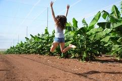 Serra delle banane fotografia stock libera da diritti