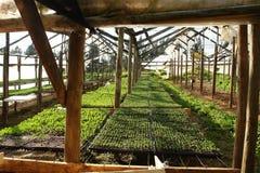 Serra delle piante Immagine Stock Libera da Diritti