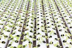Serra di coltura idroponica Insalata verde organica delle verdure nell'azienda agricola di coltura idroponica Immagini Stock Libere da Diritti