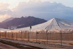 Serra di plastica industriale della larga scala in Spagna Immagine Stock Libera da Diritti