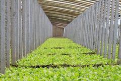 Serra di verdure Immagini Stock