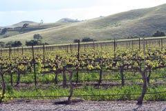 Serra di viti Immagine Stock