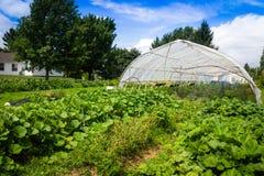 Serra e giardini di agricoltura immagine stock libera da diritti