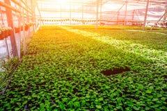 Serra idroponica moderna con il sistema di controllo di clima al sole, agricoltura industriale Fotografia Stock Libera da Diritti