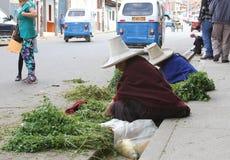 Serra mulheres com alfafa Foto de Stock Royalty Free