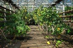 Serra rurale dell'azienda agricola per i limoni crescenti ed altri frutti immagine stock libera da diritti
