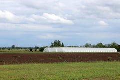 Serra su agricoltura del campo Immagine Stock Libera da Diritti