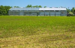 Serra su un'azienda agricola per produzione alimentare Fotografie Stock Libere da Diritti