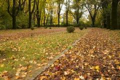 Serralves Park in the fall Stock Photos