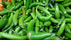 Serrano pepper, Capsicum annuum. Cultivar with medium size pepper narrower than jalapeno but hotter, harvested green, eaten raw, used in salsa or other dishes royalty free stock photography