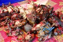 Serrated mud crab Stock Photo