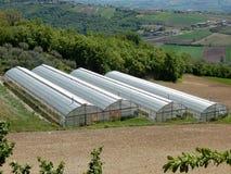 Serre agricole Fotografie Stock