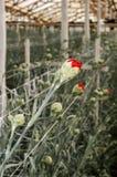 Serre avec des fleurs Photographie stock libre de droits