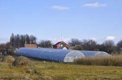 Serre in azienda agricola ucraina Fotografia Stock Libera da Diritti